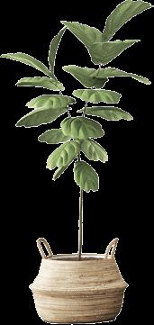 planta store
